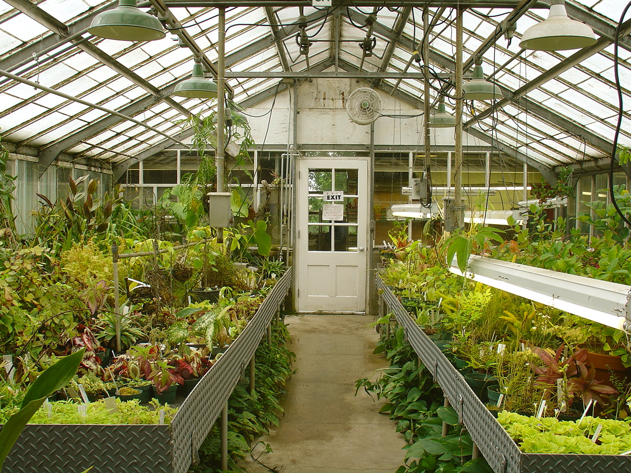 gallery of backyard greenhouse designs. best 25 greenhouse plans
