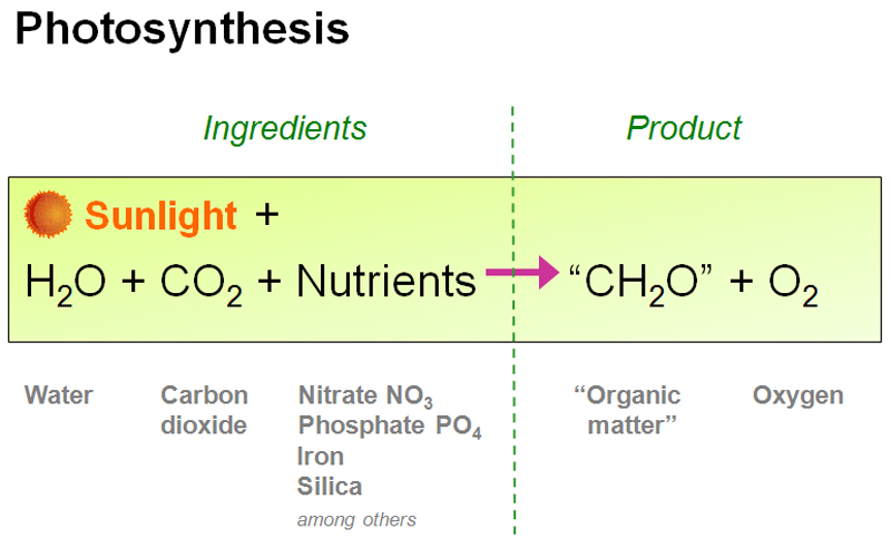 photosynthesis earthguide online classroom animated water cycle diagram