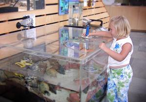 Magnetometer at the Ocean Institute  Ocean Magnetometer